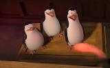 《马达加斯加的企鹅》精彩截图