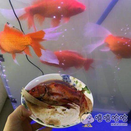 究竟是谁把我的金鱼给煮了
