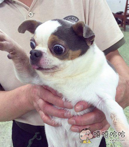 动物医院刚进门的一只狗也是惊呆了…