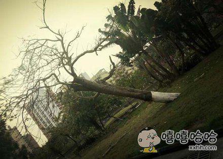 一颗坚强的树
