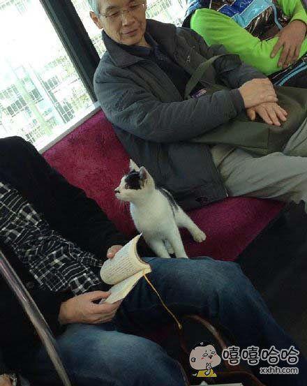 十一区电车上出现了一只爱学习的猫星人。