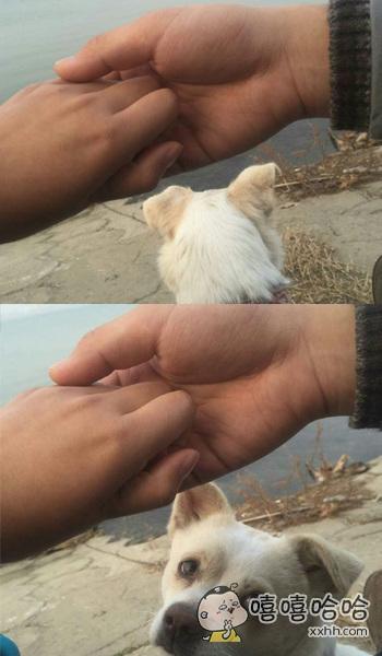 在河边发生了一起严重虐狗事件。