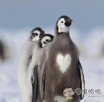 心中永远充满爱!