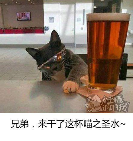 喵人永不为奴!!!