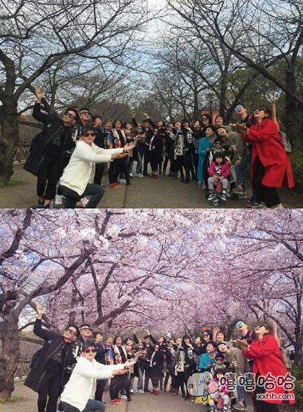 去看日本樱花,需要手动P图