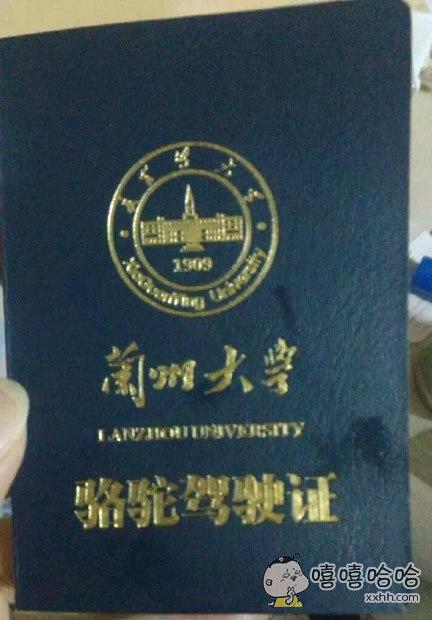 终于拿到驾照了!