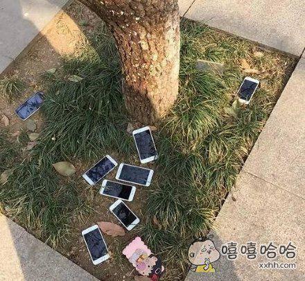 树上掉了好几个苹果,我该不该捡呢?