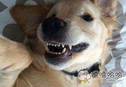 二汪的牙套意义在哪?让它咬人?