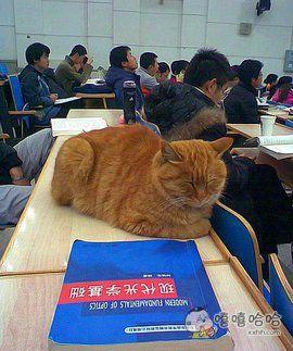 北大旁听猫,免费听了5年课,想当初我们好不容易带进来二汪一只,愣是让老师踢跑了。陪伴我们大学最多的动物,就只剩小白鼠、大白兔。。。。。。