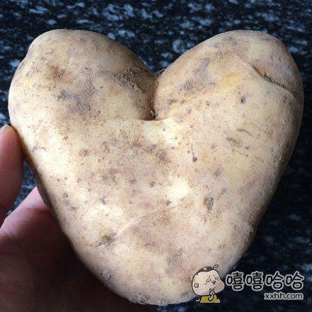 一个向我表白的土豆~