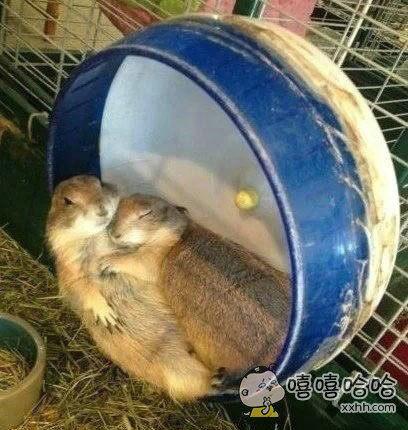 嘘~~我不能动,否则会吵醒它!
