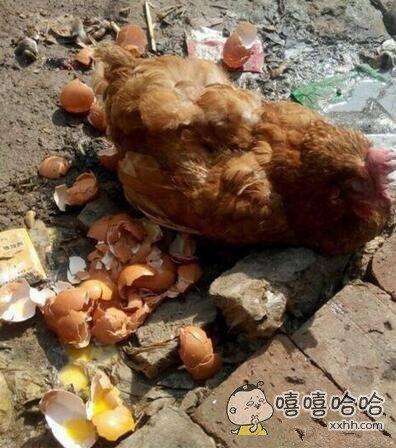 卧槽,谁造这只母鸡是几个意思?