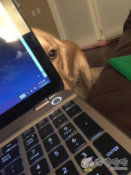 不跟我玩就一直盯着你。