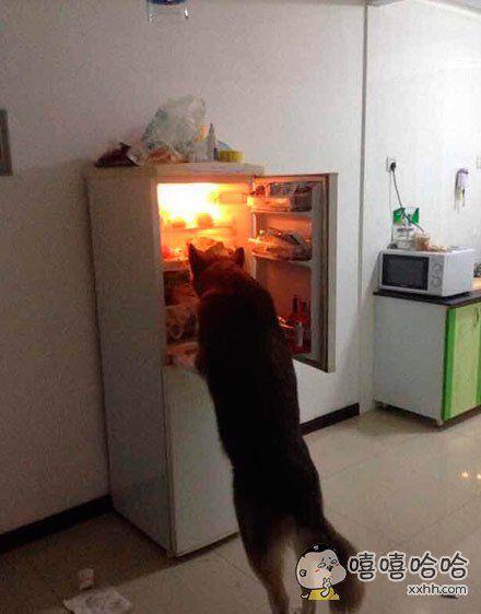 这货竟然会自己开冰箱偷吃的了