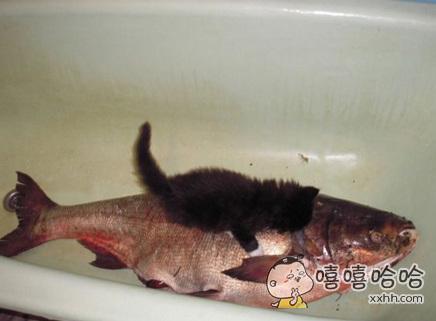 喵没有梦想,跟咸鱼有什么区别???
