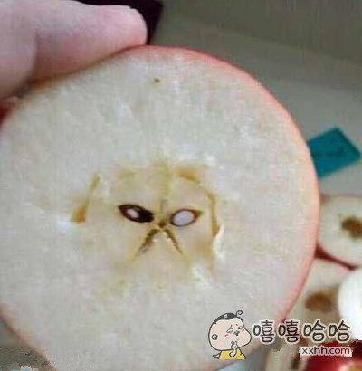 发现一只隐藏在苹果里面的喵星人
