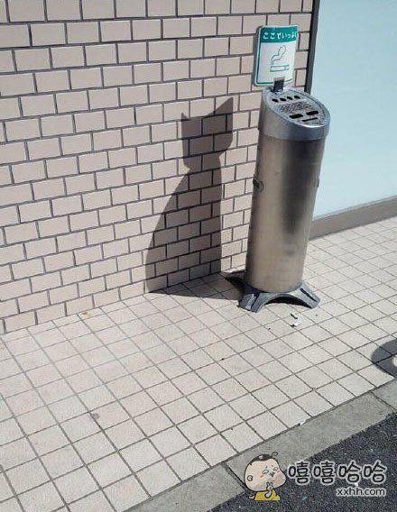 神奇的角度,影子是一只猫星人,难道是垃圾桶的真身?