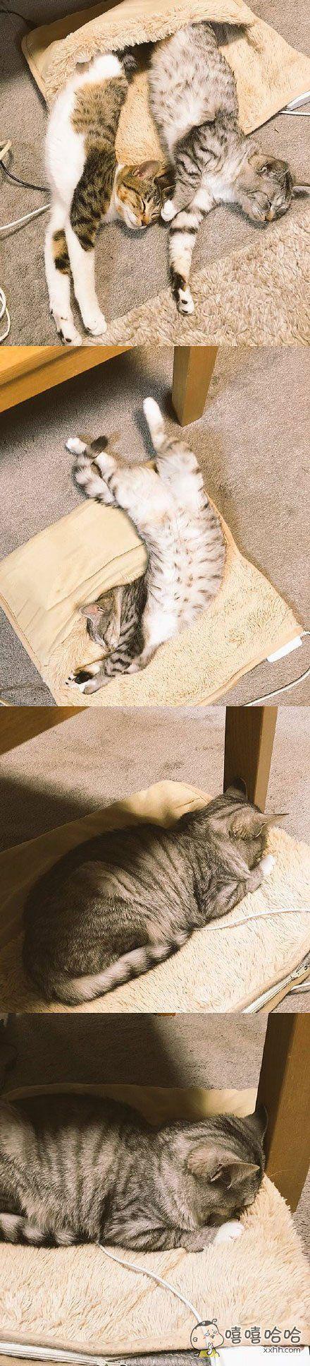 岛国一名网友为爱猫买了猫咪专用电毯,有一天出门忘记开电毯,回家发现一只喵星人已经落寞的不成样子了。