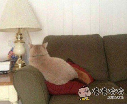 日本一网友说,他家猫每次犯了错误被他骂了之后就会这样坐着,怎么叫都不理他。。。。