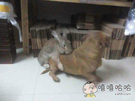 一看就不是什么正经兔!