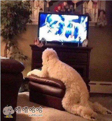 这真的是一条狗吗?