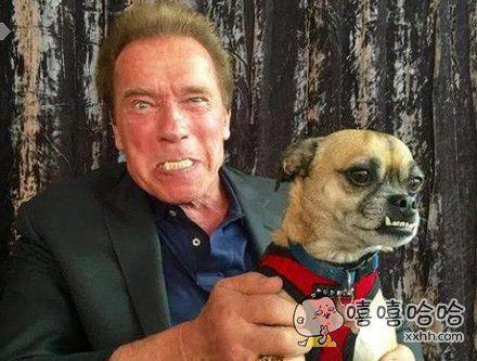 狗:后面智障!