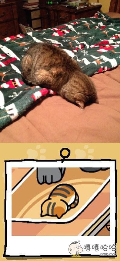 这喵睡觉的样子跟游戏里的这只一毛一样