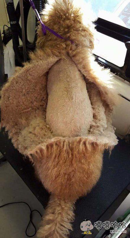 这是给狗狗做了件衣服吗!