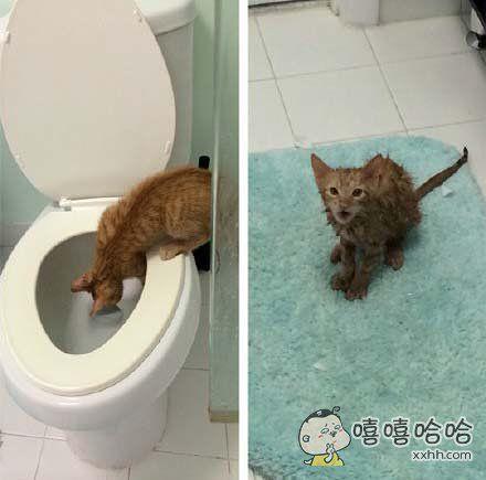 这次成了落汤猫之后,想必以后它再也不会跑马桶里来喝水了