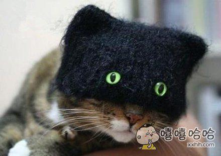 喵星人的帽子好给力