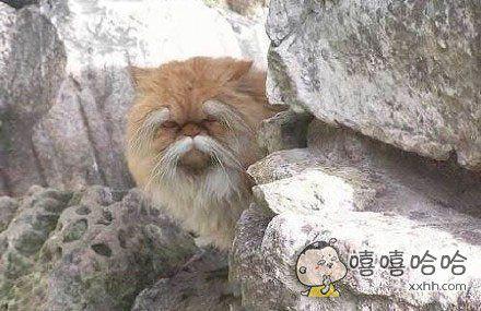 一网友说他逛公园时感觉有人盯着他,然后在不远的假山后面发现了一个长得很微妙的喵在看着他。。。