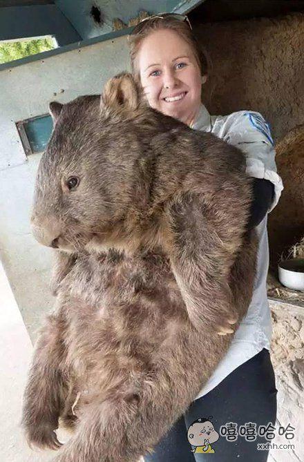 世界上最高龄的袋熊