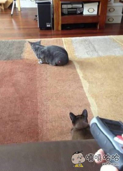 这俩猫咪之间的大战就要一触即发了~