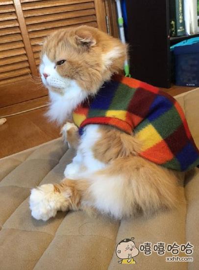 思考猫生呢,请勿打扰哦~