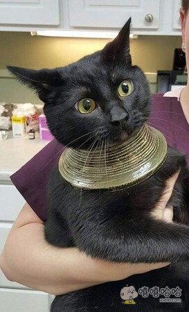 朕就是传说中的埃及神喵,有什么愿望,你说吧
