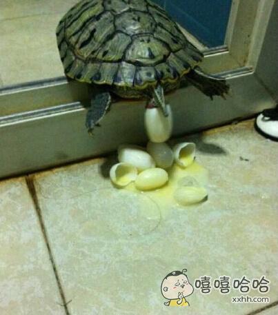 拍到了乌龟下蛋。。。但是。。。碎了啊啊啊啊!