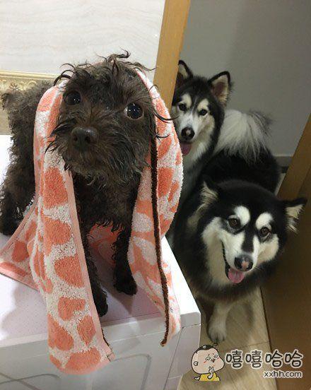 俩禽兽围观刚出浴的少女