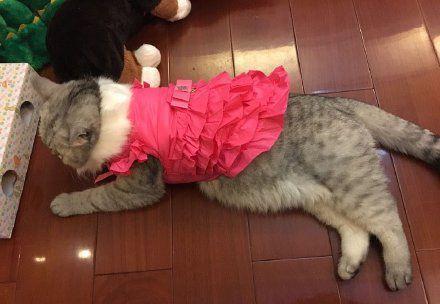 这衣服是不是小了啊