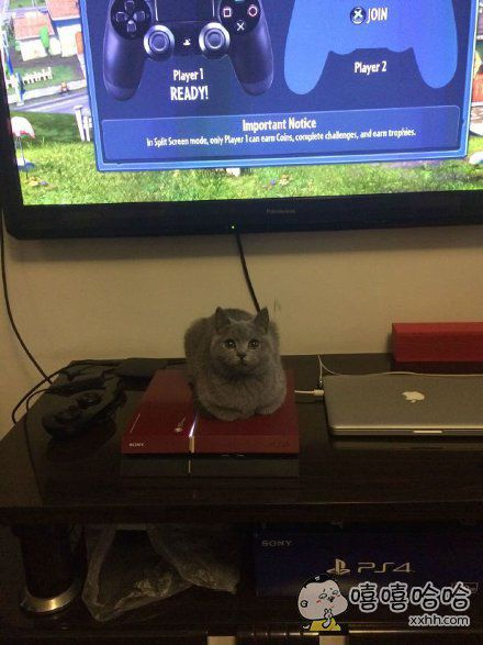 请问主机上长猫了会影响散热吗?在线等,挺急的