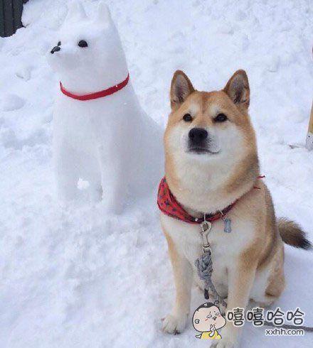 说,这就是你在外边的狗?