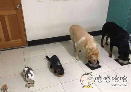 家里宠物吃饭的时候是这样的,强迫症患者表示这个排位挺舒心的。