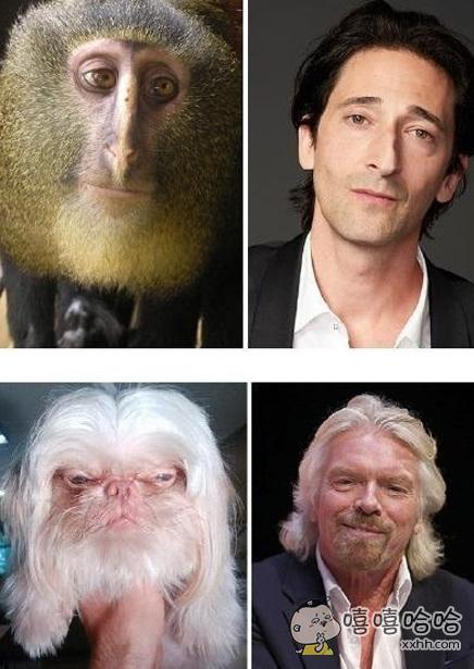 动物与名人之撞脸