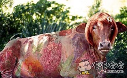这牛肯定是女的
