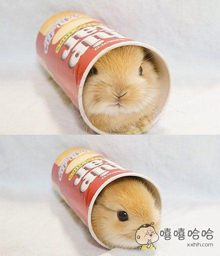 老板,给我来一打兔纸薯片