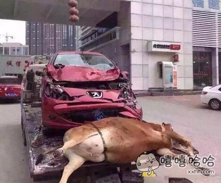 卧槽,女司机就是牛逼