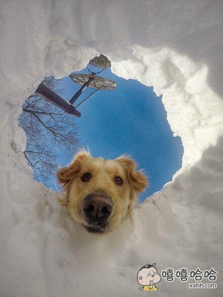一个被困雪里的人。。和他家的狗