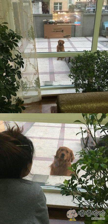 每次放它出去玩都坐在窗前这么望着屋里