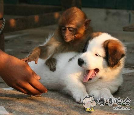 亲,这狗是我滴,莫碰~
