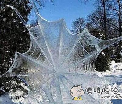 真心伤不起啊,连蜘蛛网都冻住了