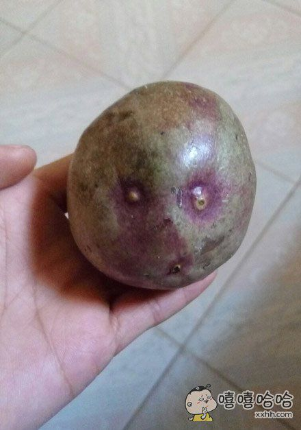 这个百香果长得好奇葩